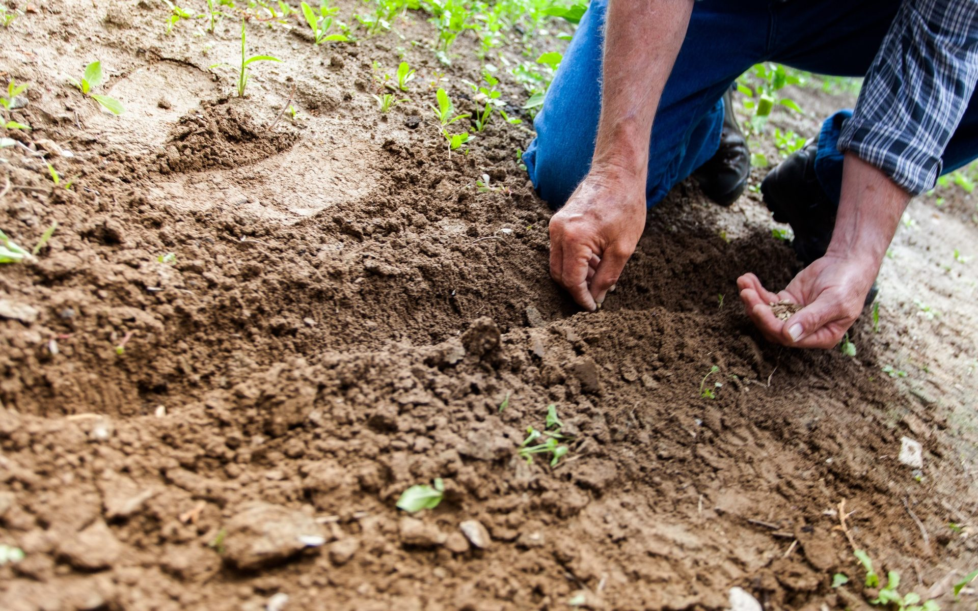 A man planting seed in the soil.